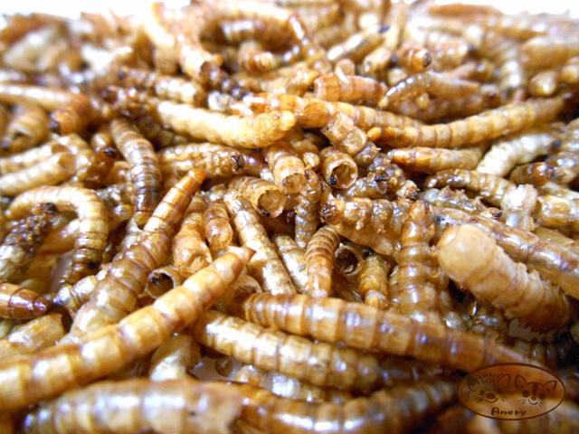 EXOTIC NUTRITION ドライミルワーム〈フクロモモンガ・ハリネズミ〉昆虫を与えよう 人気の定番 乾燥ミルワーム